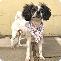 Adopt A Pet :: Oscar - Pueblo, CO