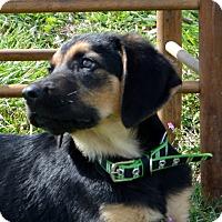 Adopt A Pet :: Solomon - Westport, CT