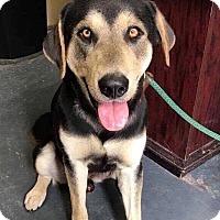 Adopt A Pet :: KEANU - Toronto, ON
