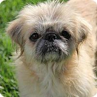Adopt A Pet :: Luna Goodlove - Richmond, VA