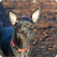 Adopt A Pet :: Houdini - Ft. Myers, FL