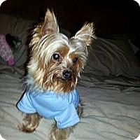 Adopt A Pet :: Martini - Goodyear, AZ