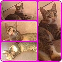 Adopt A Pet :: Balya - Modesto, CA