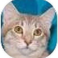 Adopt A Pet :: Nimitz - Kensington, MD