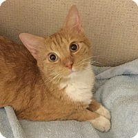 Adopt A Pet :: PEANUT BUTTER- 2015 - Hamilton, NJ