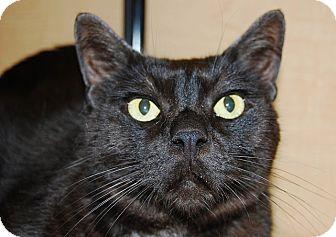 Domestic Mediumhair Cat for adoption in Whittier, California - Weeman