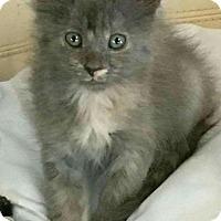 Adopt A Pet :: Lindsay - Texarkana, AR