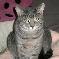 Adopt A Pet :: Oralee - Lombard, IL