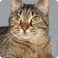 Adopt A Pet :: Tiny Paws - Tulsa, OK