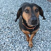 Adopt A Pet :: Elvis - Trenton, NJ