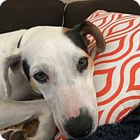 Adopt A Pet :: Tammi - St Petersburg, FL