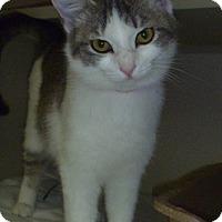 Adopt A Pet :: Allison - Hamburg, NY