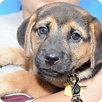 Adopt A Pet :: Aaron - New York, NY