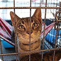 Adopt A Pet :: mikey - Santa Monica, CA