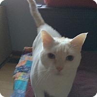 Adopt A Pet :: Frosty - West Lafayette, IN