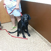 Adopt A Pet :: Shadow - Columbus, IN