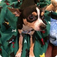 Adopt A Pet :: Owen - Chicago, IL