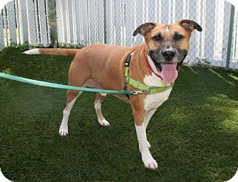 Hound (Unknown Type) Mix Dog for adoption in Bradenton, Florida - Franky
