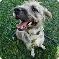 Adopt A Pet :: Mother - Denver, CO