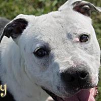 Adopt A Pet :: Slay - Livingston, LA