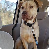 Adopt A Pet :: Chauncey - Burlington, NC