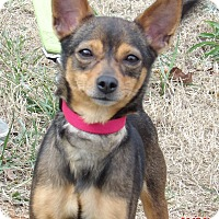 Adopt A Pet :: Princess Leia (7.5 lb) Video! - Williamsport, MD