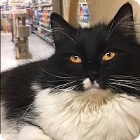 Adopt A Pet :: Mia - Jackson, NJ