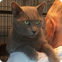 Adopt A Pet :: Smokey - Slidell, LA