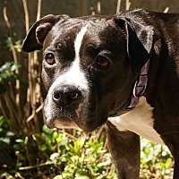 Adopt A Pet :: Eartha Kitt - Dayton, OH