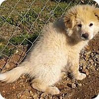 Adopt A Pet :: Cotton - Athens, GA