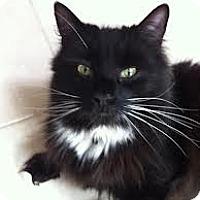 Adopt A Pet :: Fran - Lancaster, MA