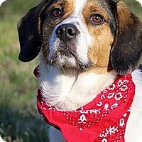 Adopt A Pet :: Charlie - Albany, NY