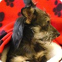 Adopt A Pet :: Taffie  boy pup - Sacramento, CA