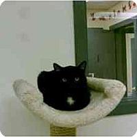 Adopt A Pet :: Luke - Milwaukee, WI