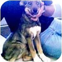 Adopt A Pet :: ASHES - Gilbert, AZ