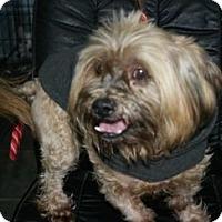 Adopt A Pet :: Eli AKA Reggie - Canoga Park, CA