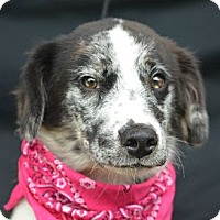Adopt A Pet :: Theodore - Plano, TX