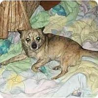 Adopt A Pet :: Chico - Johnsburg, IL