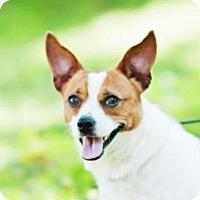 Adopt A Pet :: Jennie - Brattleboro, VT