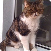 Adopt A Pet :: Binky - Beverly Hills, CA