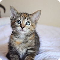 Adopt A Pet :: Olive - Xenia, OH