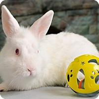 Adopt A Pet :: Drew - Marietta, GA