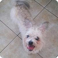 Adopt A Pet :: Benneit - The Woodlands, TX