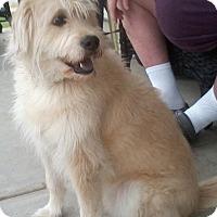 Adopt A Pet :: Socks - Adopted - Tipp City, OH