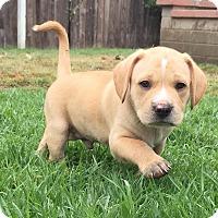 Adopt A Pet :: John - Mission Viejo, CA