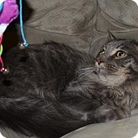 Adopt A Pet :: Clarence - Loveland, CO