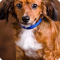 Adopt A Pet :: Trip - Owensboro, KY