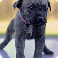 Adopt A Pet :: Peas - Waldorf, MD