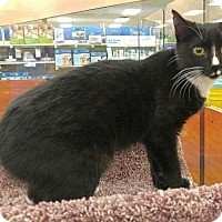 Adopt A Pet :: PRINCESS - Powder Springs, GA