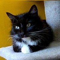 Adopt A Pet :: Amelie - Eugene, OR